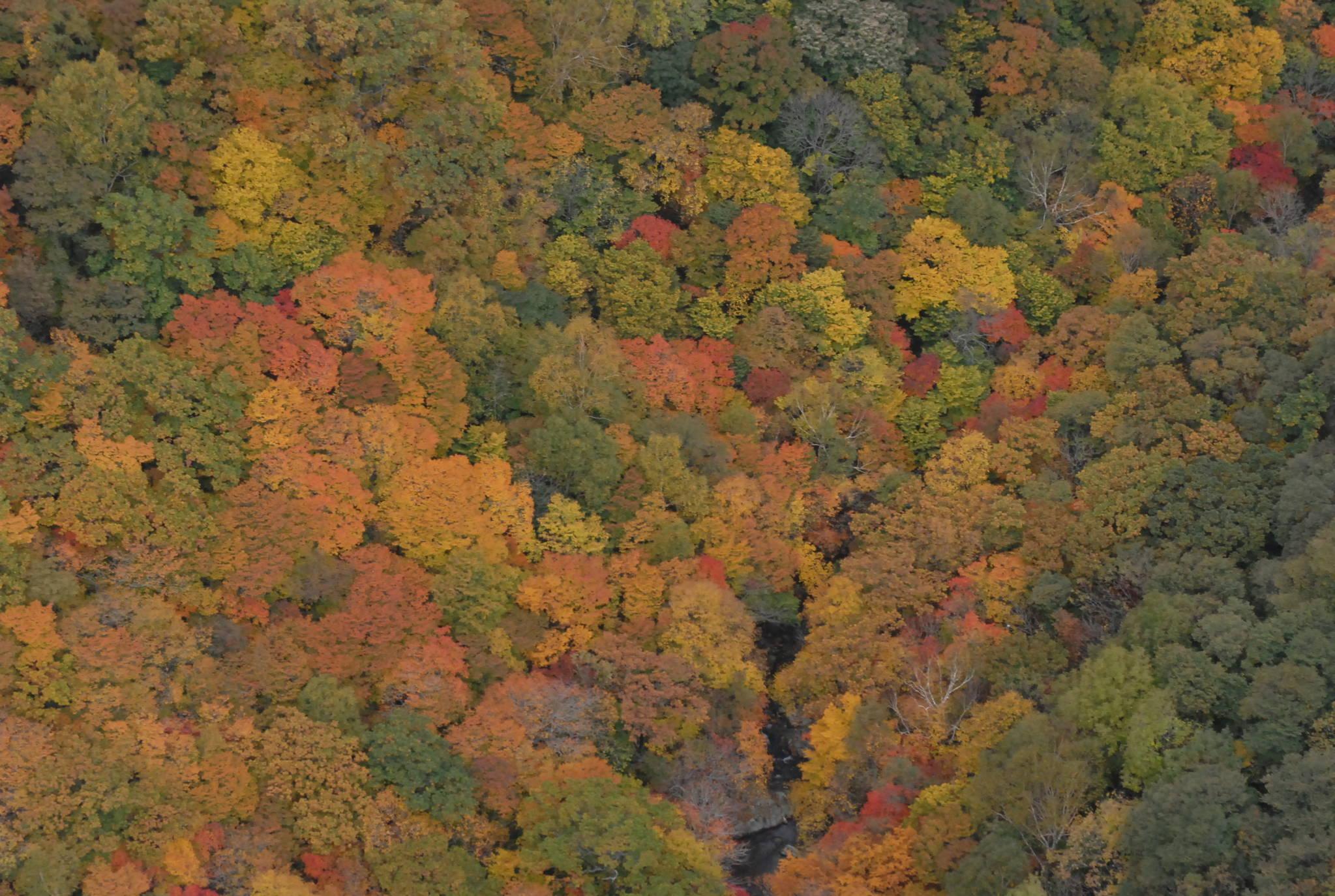 백두대간의 가을 단풍 [사진 녹색연합 서재철 전문위원]