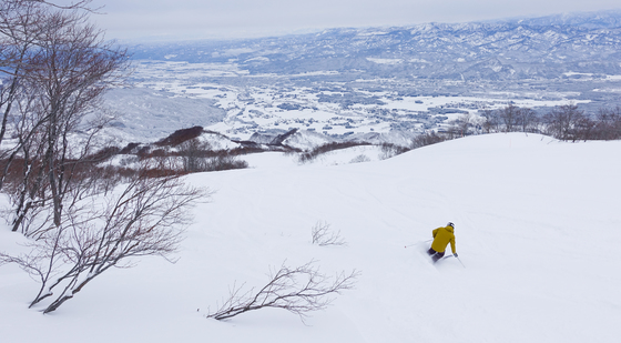 일본 니가타현은 스키어와 스노보더에게 천국 같은 곳이다. 파우더처럼 고운 눈이 많이 쌓여 있는데다 날씨가 춥지 않아서다. 묘코에 있는 아라이리조트에서 파우더 스키를 즐기는 스키어의 모습.