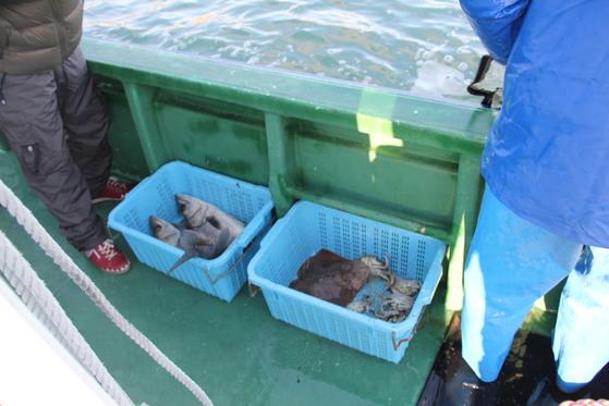후쿠시마 인근 해역에서 잡힌 농어 [사진 중앙포토]