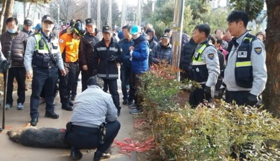 광주 푸른길공원 셰퍼드 포획 현장. [사진 연합뉴스]