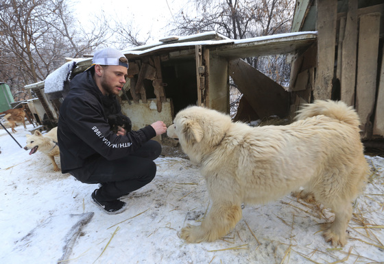 지난 23일 경기도 시흥의 개농장을 방문한 미국 스키선수 거스 켄워시. [AP=연합뉴스]