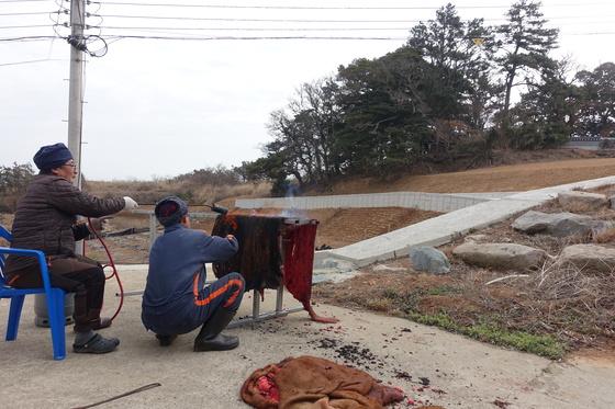 마을회관 마당에서 소가죽의 털을 그을리는 주민. 작업이 끝나면 건너 쪽에 보이는 당에 제물로 올려준다. 소 머리·족·가죽만 제물로 쓴다.