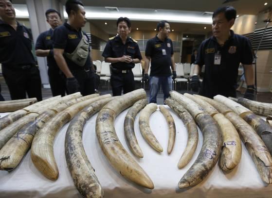 지난해 11월 태국 방콕 세관에 압수된 코끼리 상아. [연합뉴스]