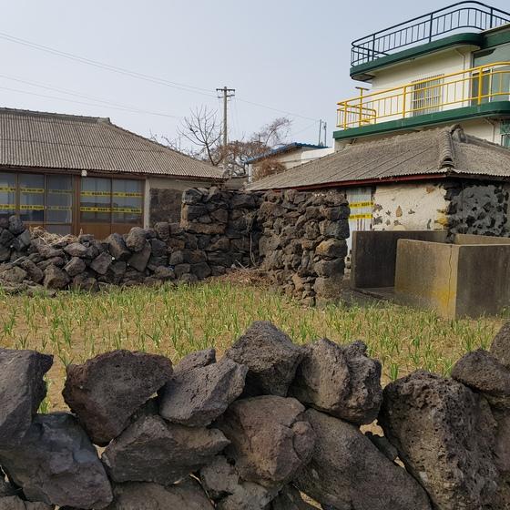 여성 피살 사건이 발생한 제주 구좌읍 S게스트하우스. 시신은 폐가에서 발견됐다. 장세정 기자