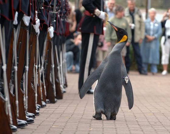노르웨이 왕실 근위대의 마스코트인 닐스 올라프가 현역 준장 신분으로 사열을 하고 있다. [사진 영국 국방부]