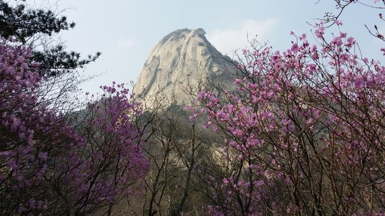 북한산 봄 전경. [사진 전영미]