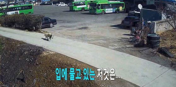 경북지방경찰청은 최근 페이스북에 길 위의 가방을 가져가는 개가 촬영된 CCTV 동영상을 올렸다. [사진 경북경찰청 페이스북 캡처]