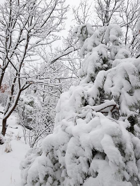 대구에 대설주의보가 발효된 21일 오전 북구 조야동 함지산에 눈이 쌓여 있다. [독자 이근우씨 제공=연합뉴스]