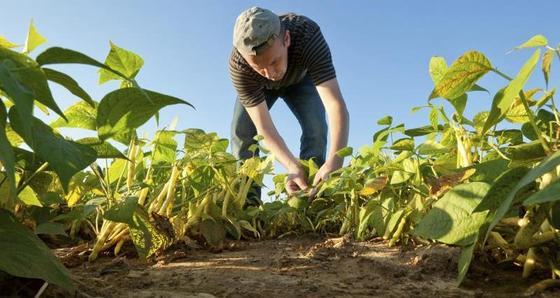 반이민 정서로 동유럽 출신 이민자들이 빠져나가면서 영국 농장에선 제때 수확하지 못한 과일과 채소 등이 썩는 일이 잦아지고 있다. [NFU 사이트 캡처]