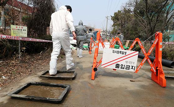 김포서 첫 돼지 A형 구제역