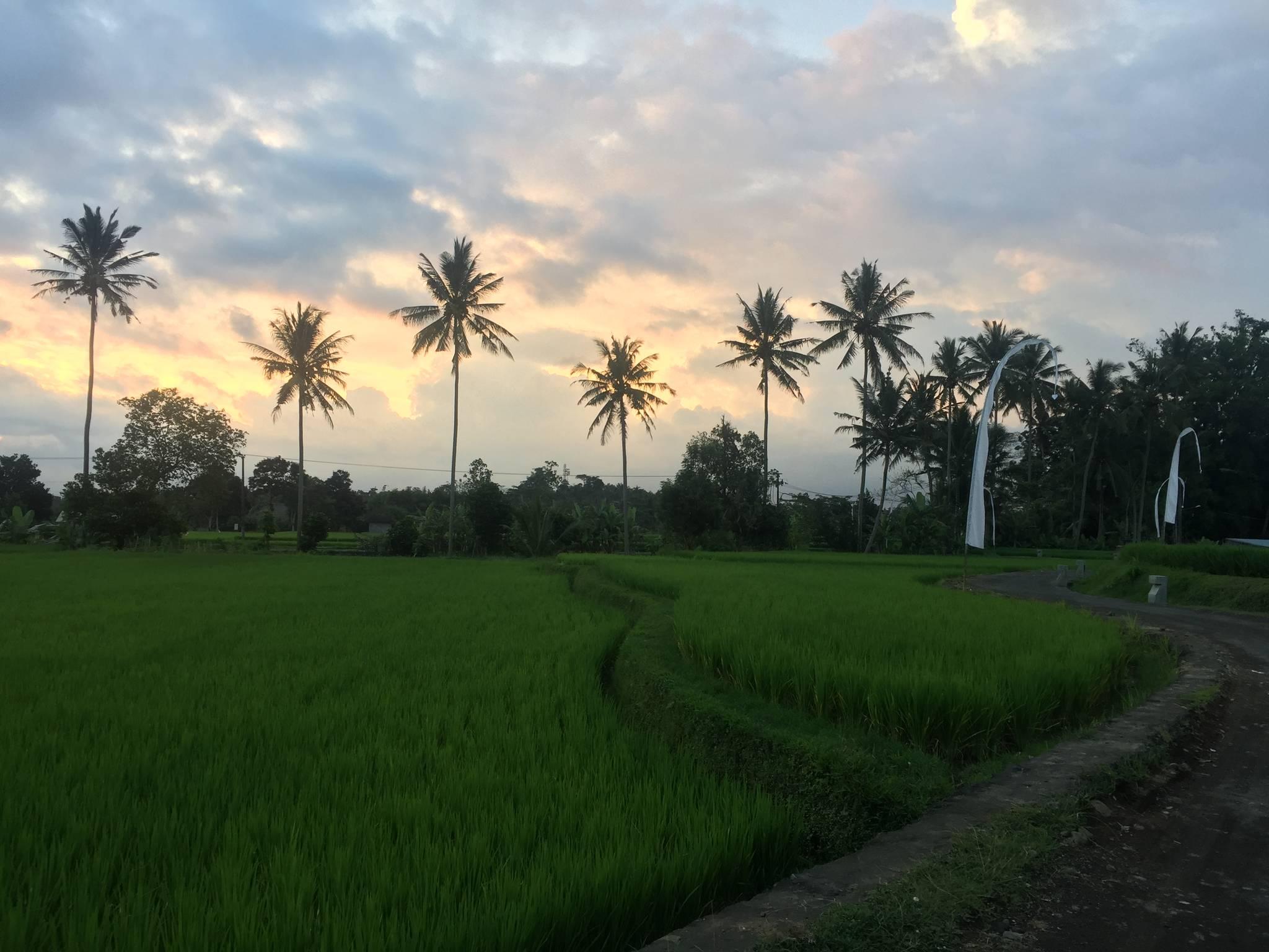 4위 인도네시아 발리.