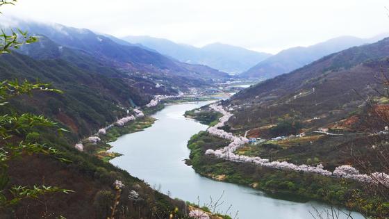 매화와 산수유꽃이 지고 나면 벚꽃의 차례가 온다. 4월 초면 섬진강 줄기 따라 벚꽃이 만발한다.