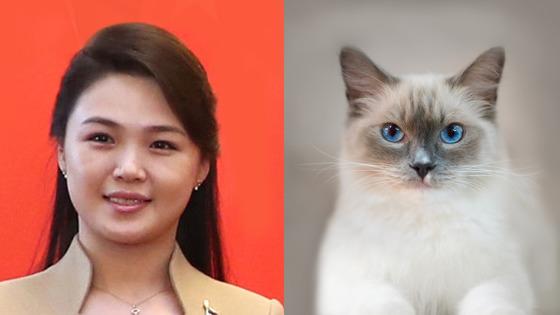 이설주와 고양이.