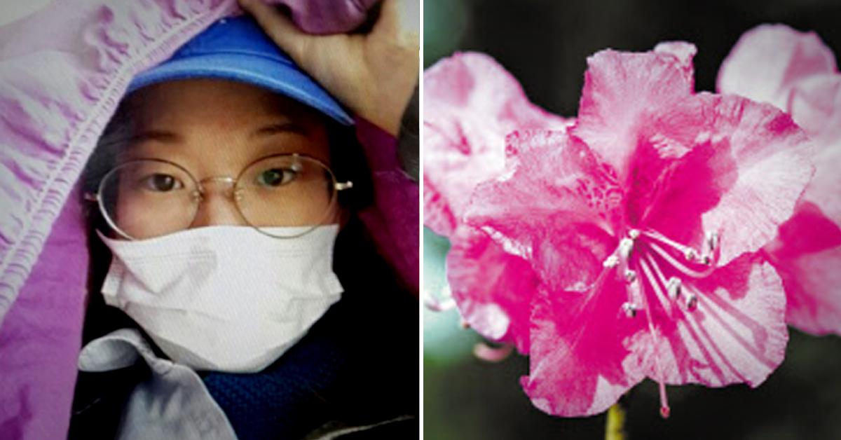 부산 실종 20대 여성이 8일간 산 속에서 진달래꽃을 따 먹으며 버텼던 것으로 알려졌다. 오른쪽 사진은 진달래꽃. [사진 부산경찰청ㆍ중앙포토]