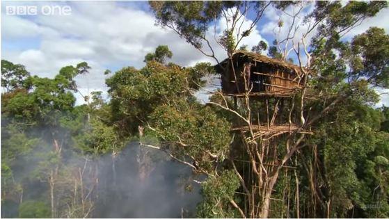 BBC <휴먼 플래닛>의 총 8부작 중 4회차인 '정글-나무의 사람들'의 방영 장면. [유튜브]