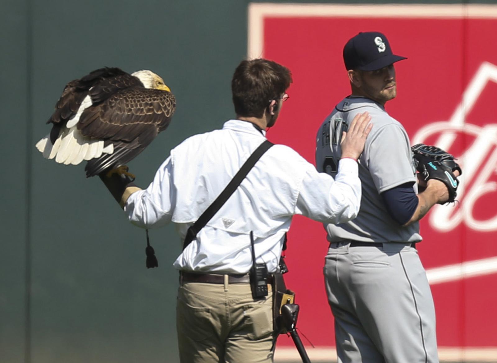 5일(현지시간) 시애틀 선발투수 제임스 팩스턴에게 날아들었던 독수리를 야구장 관계자가 떼어낸 후 팩스턴의 어깨를 두드리고 있다. [AP=연합뉴스]