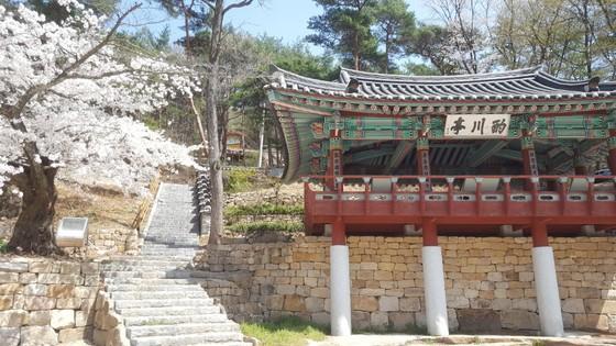 만개한 벚꽃과 어우러진 울산 작천정. 과거 문인들이 시를 읊으며 풍류를 즐기던 곳이다. [최은경 기자]