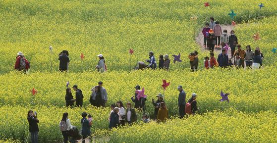지난 8일 부산 강서구 대저생태공원을 찾은 상춘객들이 유채꽃단지를 산책하며 봄기운을 만끽하고 있다.송봉근 기자