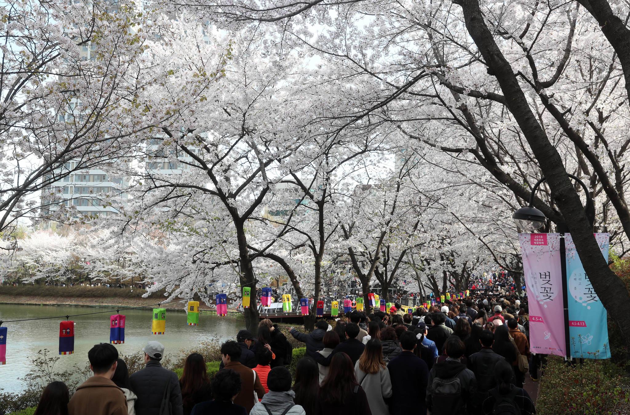 축제가 한창인 석촌호수 벚꽃의 7일 상황. 주말에는 벚꽃만큼 많은 인파가 몰린다. 축제는 오는 13일까지 열린다. 강정현 기자