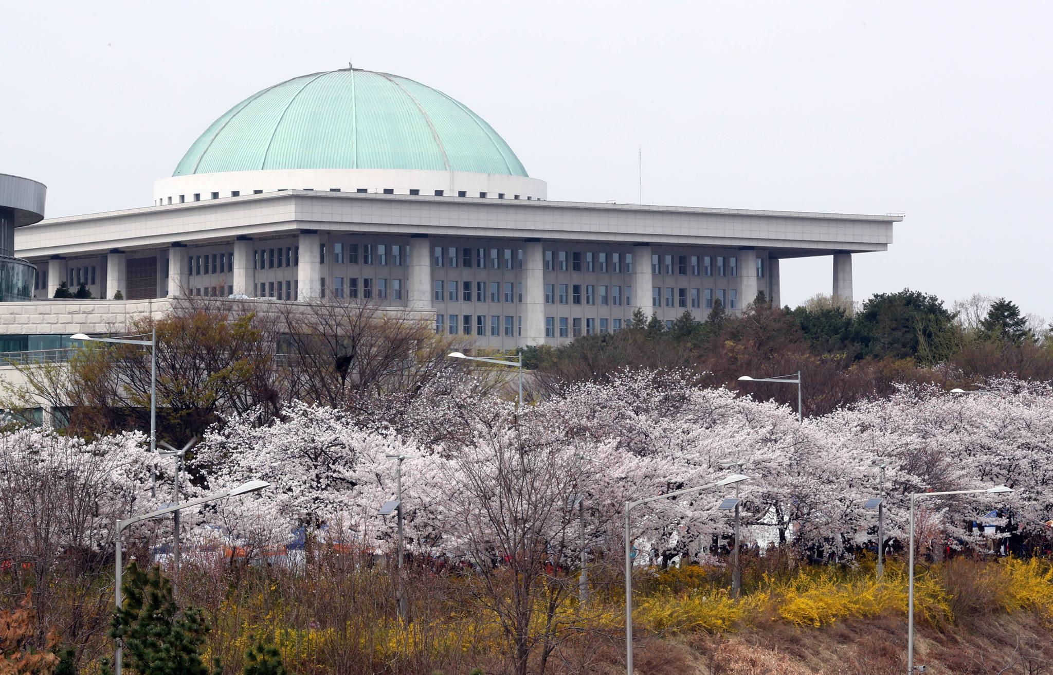 7일 서울 여의도 벚꽃축제가 개막했다. 오는 12일까지 열린다. 강정현 기자