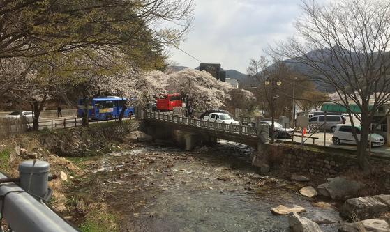 동학사 입구 벚꽃터널을 지나 주차장에 도착했다. [사진 하만윤]