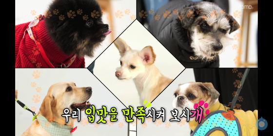 EBS의 모바일 콘텐츠 '개슐랭가이드' [사진 개슐랭가이드 방송 캡쳐]