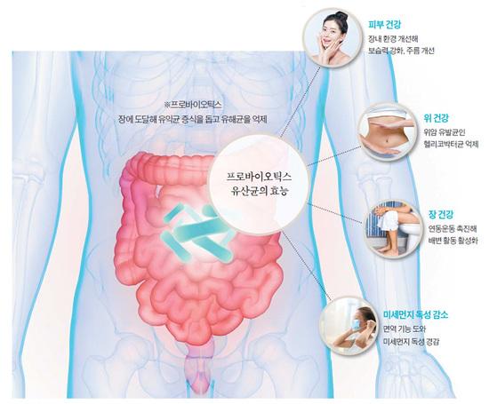 프로바이오틱스 유산균의 효능