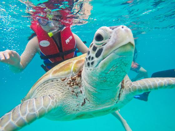 르당에서는 바다거북을 어렵지 않게 볼 수 있다. 초록거북이 특히 많이 사는데 해마다 약 2000개의 알을 낳는다고 한다.