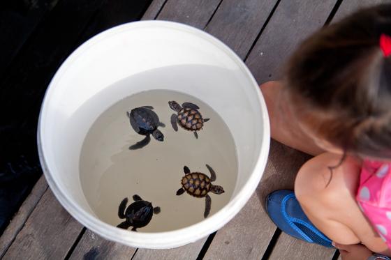 르당에는 바다거북이 많이 산다. 타라스 리조트에서는 멸종위기종에 처한 바다거북 보호활동을 벌이고 방문객 대상 교육 프로그램도 진행한다.