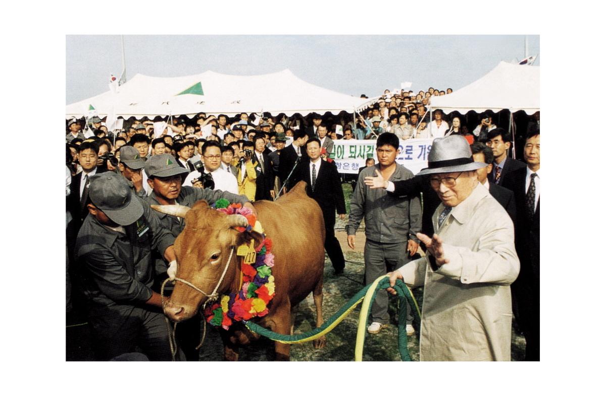 정주영 현대그룹 명예회장이 1998년 '소떼 방북'을 위해 소 고삐를 잡고 환송 인파에게 인사를 건네고 있다.