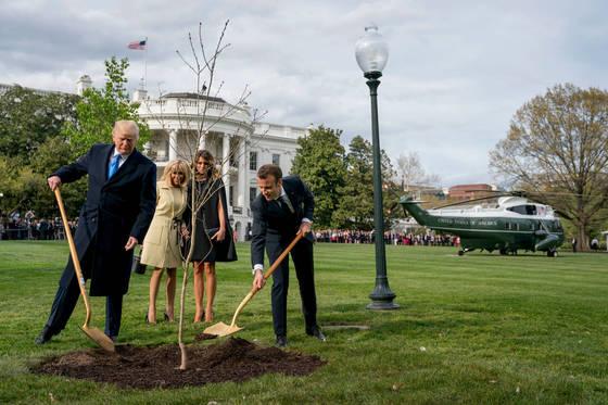 에마뉘엘 마크롱 프랑스 대통령(오른쪽)이 국빈 방문 선물로 가져온 떡갈나무 묘목을 도널드 트럼프 미 대통령이 백악관 뜰에 심고 있다. [AP=연합뉴스]