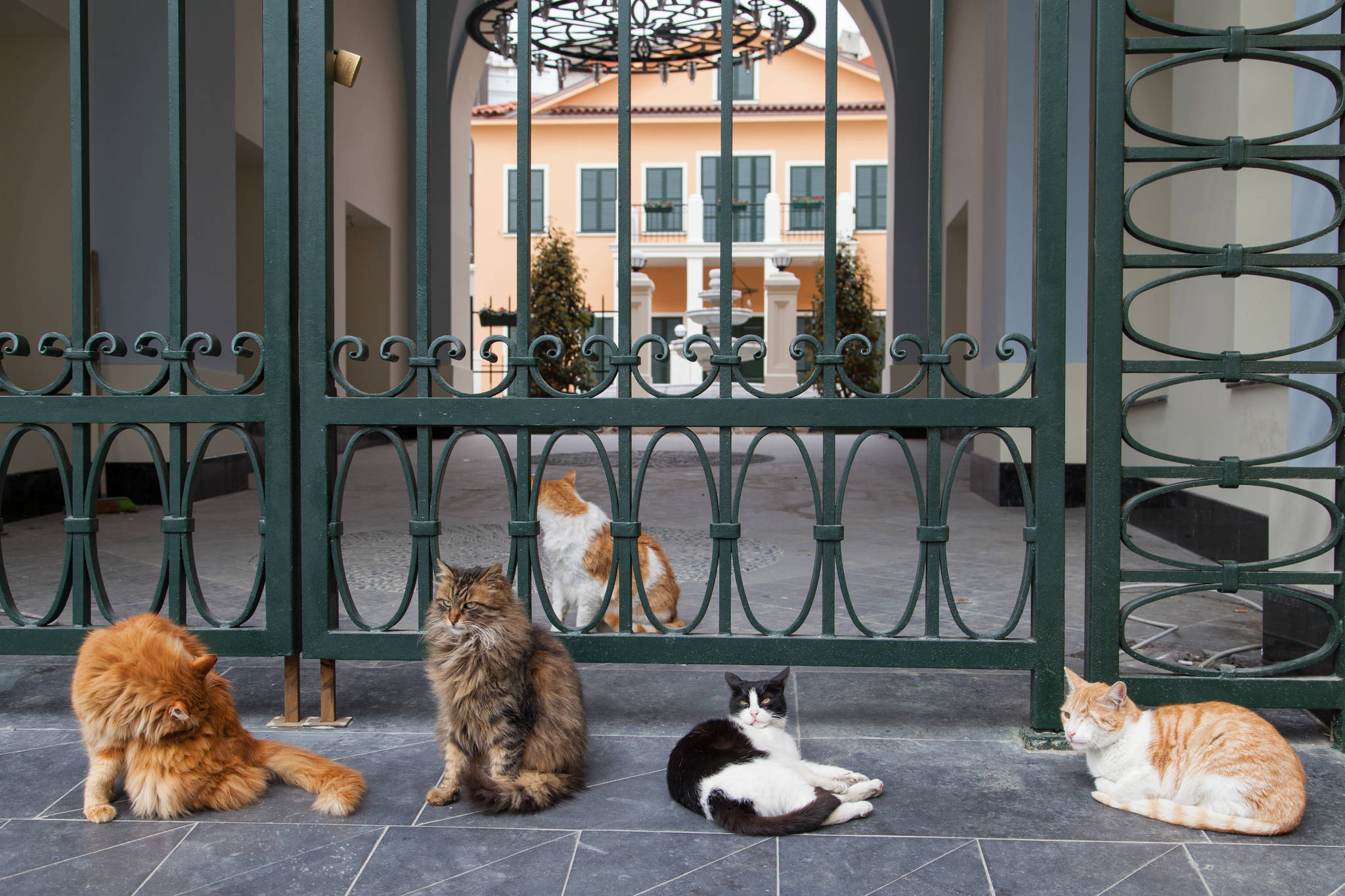 이스탄불은 개와 고양이의 천국이다. 어디를 가나 길바닥에 누워있는 큼직한 개와 사람을 경계하지 않는 고양이를 볼 수 있다. 탁심 광장 인근에서 오후의 햇살을 즐기고 있는 고양이 다섯 마리.