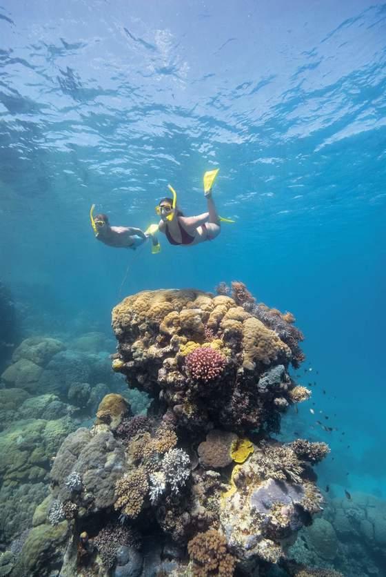 호주 대보초 물속은 신비로움 그 자체이다. 산호초 군락을 보고 있노라면 자연의 위대함에 감탄이 절로 나온다. [사진제공=호주 관광청]