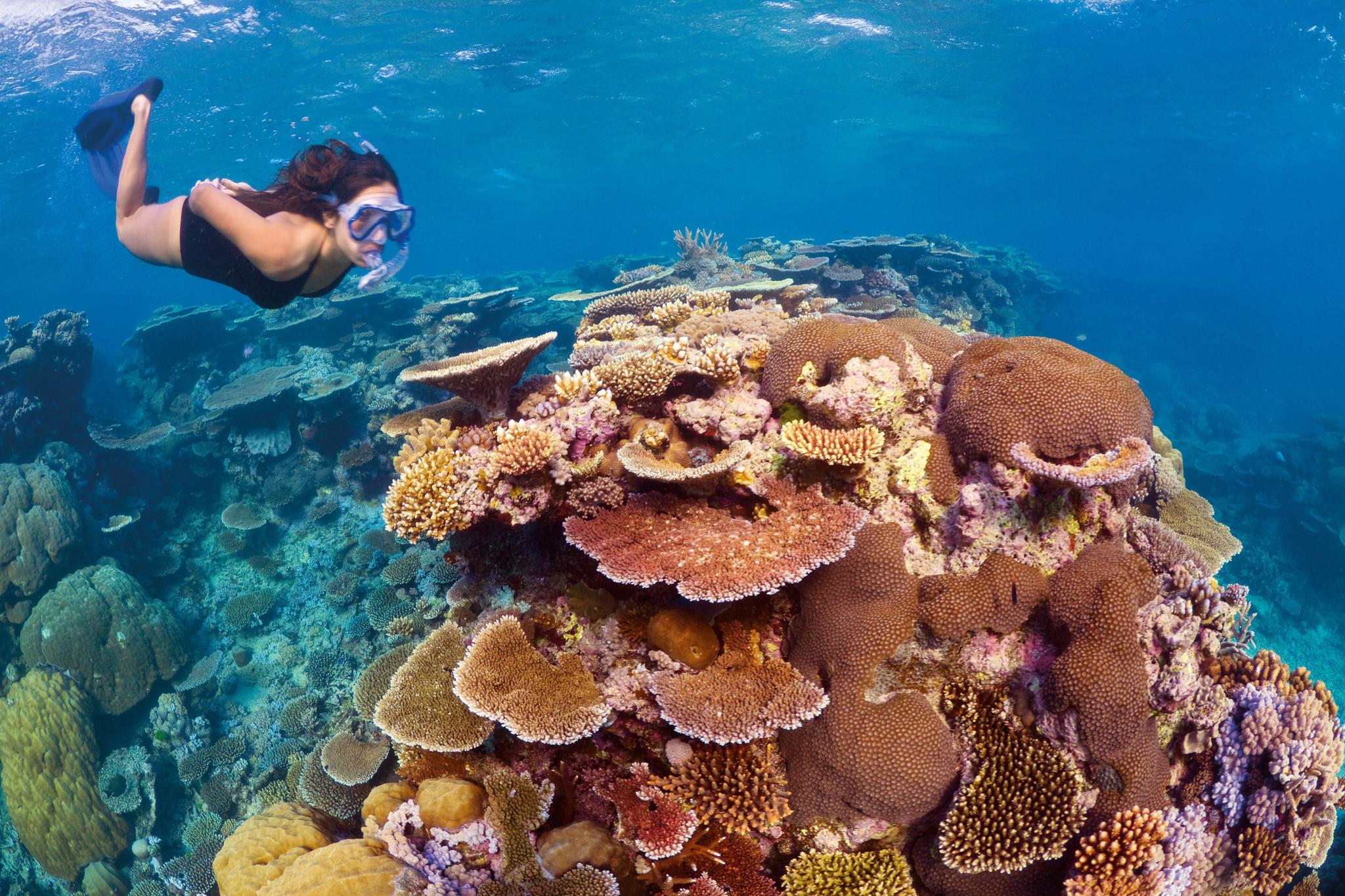 세계에서 가장 큰 산호초 지대인 그레이트 배리어 리프. 스노클링, 스쿠버 다이빙을 하며 형형색색의 산호와 열대어를 감상할 수 있는 관광자원이지만 백화현상이 확대되면서 관광산업도 타격을 입고 있다. [중앙포토]