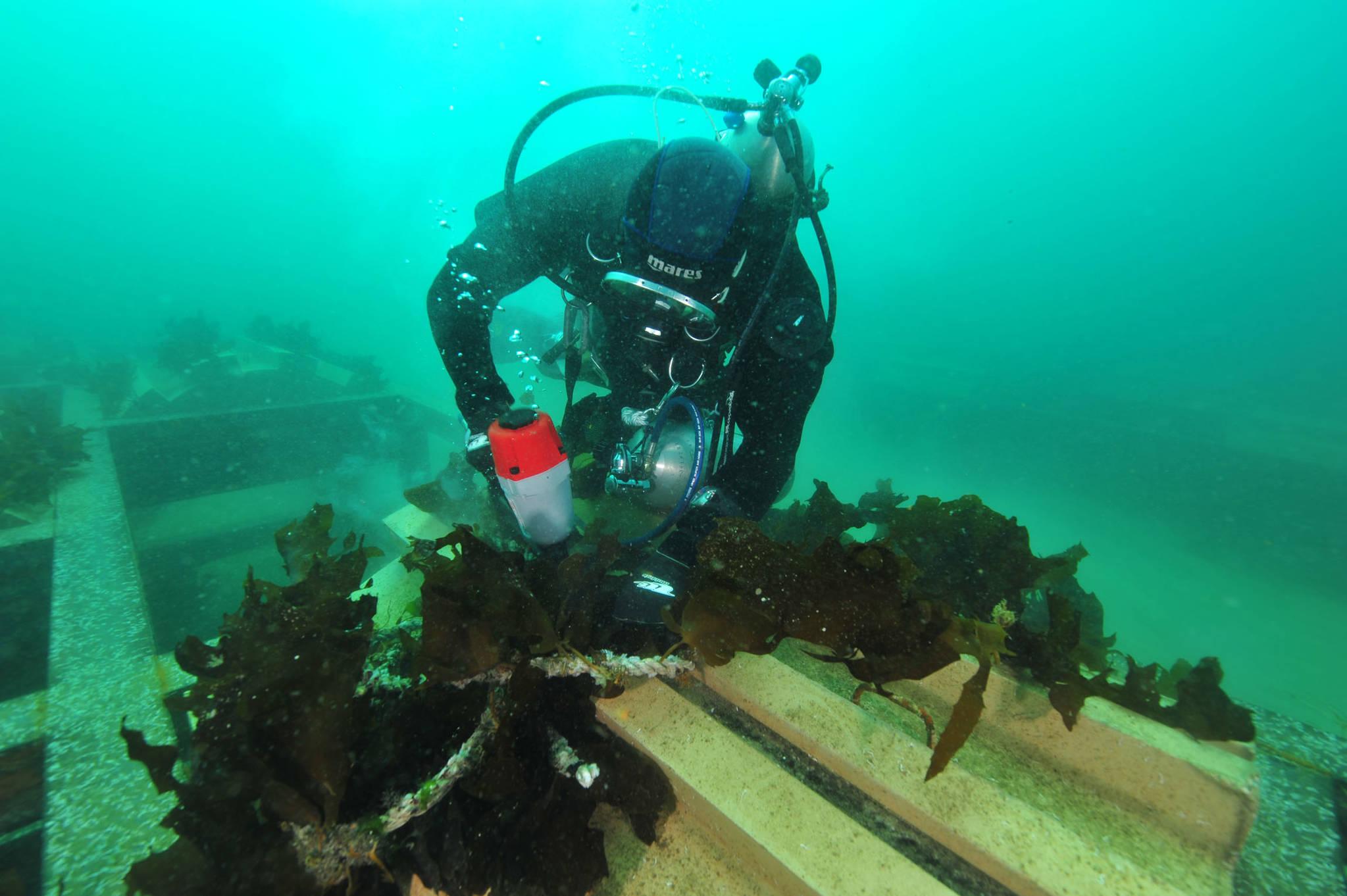 바다 숲 조성을 위해 해조류를 이식하는 모습.[한국수산자원관리공단 남해지사 제공=연합뉴스]
