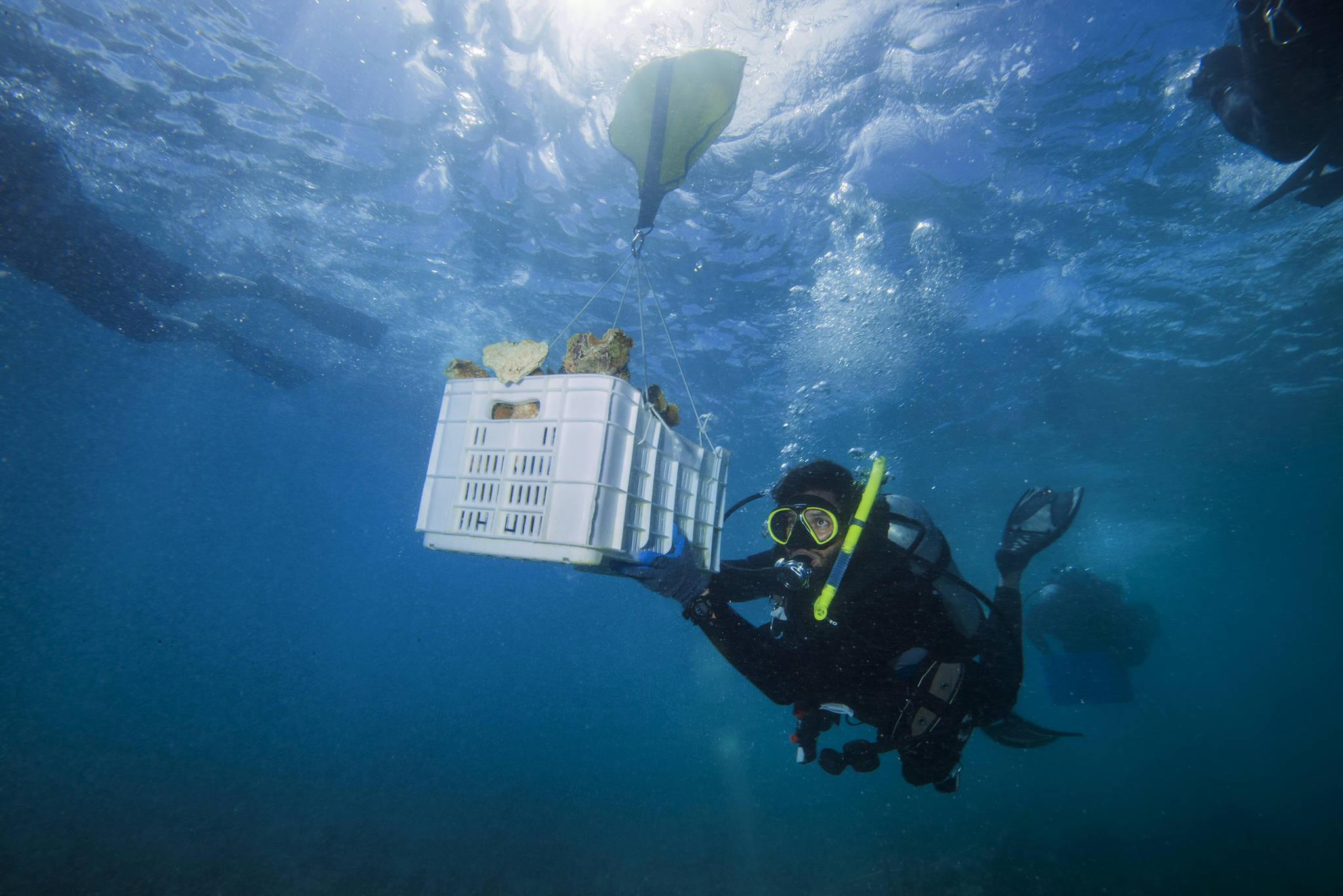 허리케인으로 훼손된 산호초를 복원하기 위해 지난 2월 푸에르토리코 연안에서는 새로운 산호를 이식하는 작업이 진행되고 있다. [AP=연합뉴스]