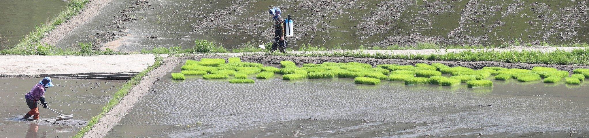 11일 경남 함양군 함양읍 팔령마을 한 논에서 농민들이 모내기 준비를 하고 있다. [뉴스1]