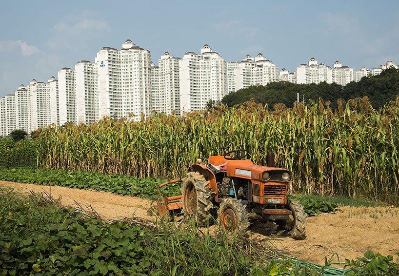 고층 아파트와 옥수수밭, 트렉터가 어우러진 서울의 기묘한 풍경. [사진 마누엘 알바레즈]