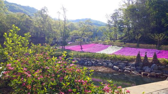 꽃이 만발한 율곡수목원의 봄 풍경. [사진 파주시]