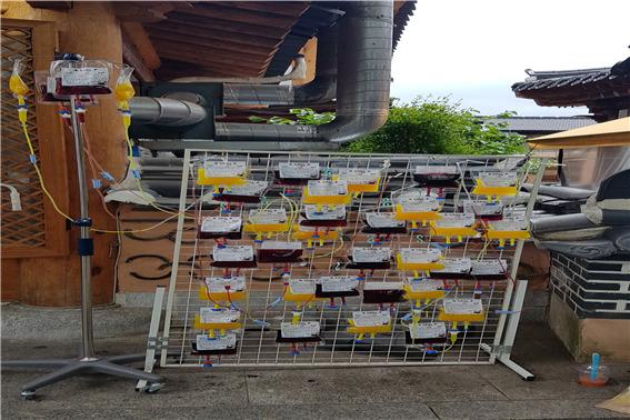 유명 관광지에서 판매중인 링거팩 형태의 어린이용 과일 음료. 식약처 점검 결과 세균 기준치가 초과한 것으로 드러났다. [사진 식약처]
