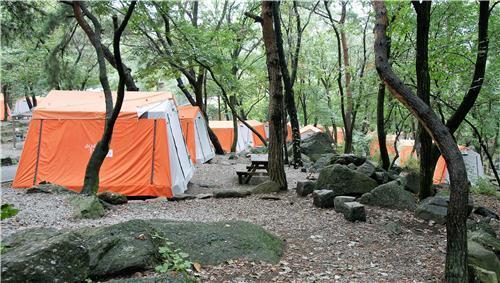 숲에서 캠핑을 할 때 백반가루나 담뱃가루를 텐트 주변에 뿌리면 뱀을 피할 수 있다. [중앙포토]