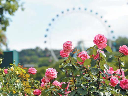 올해로 33주년을 맞은 국내 꽃 축제의 원조 '에버랜드 장미축제'가 한창이다. 오는 6월 17일까지 700여 종 100만 송이 장미를 전시한다. [사진 에버랜드]