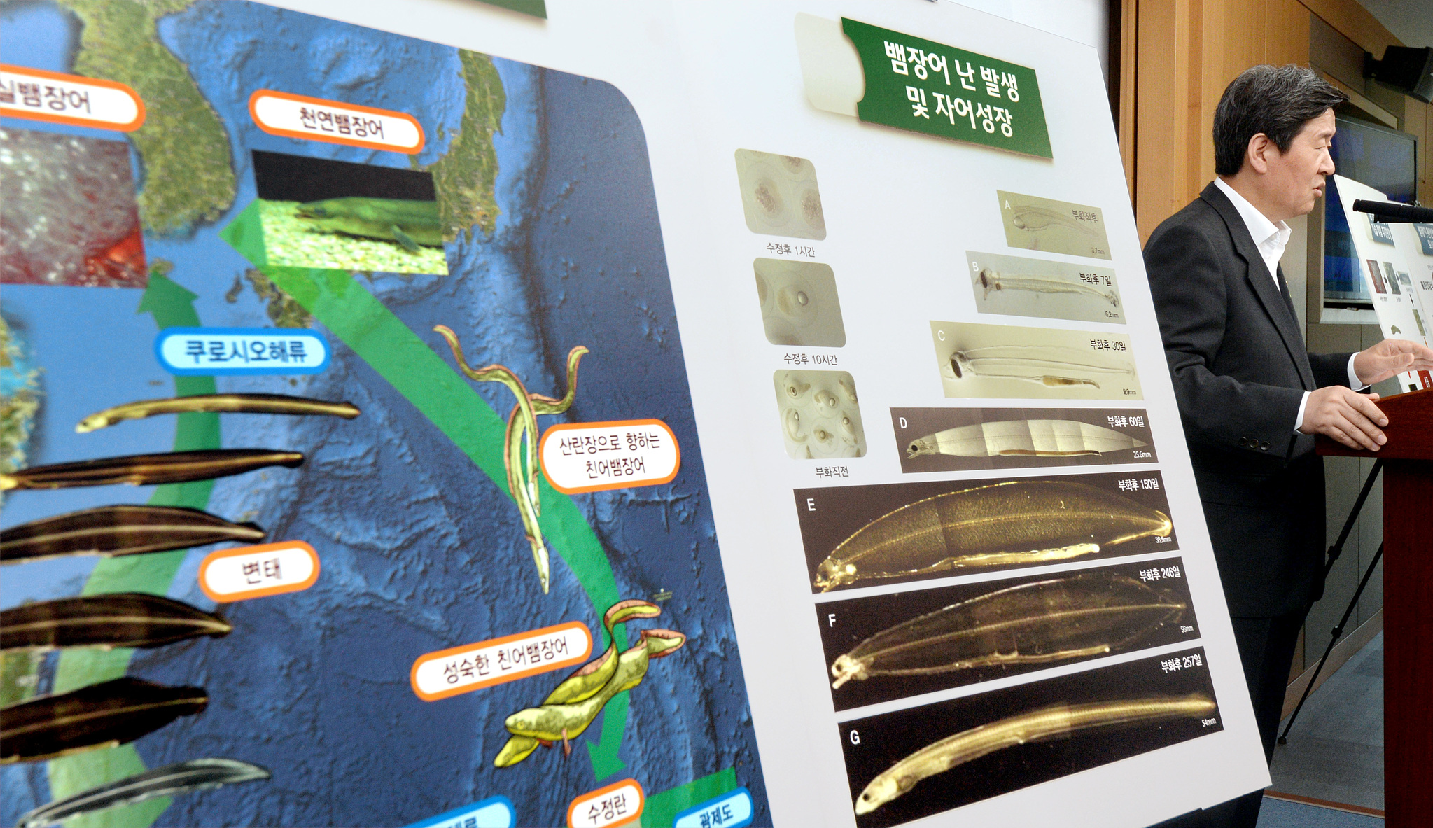 2016년 6월 당시 윤학배 해양수산부 차관이 정부세종청사 해수부 기자실에서 세계 두번째로 성공한 뱀장어 완전양식 기술에 대해 설명하고 있다. [중앙포토]