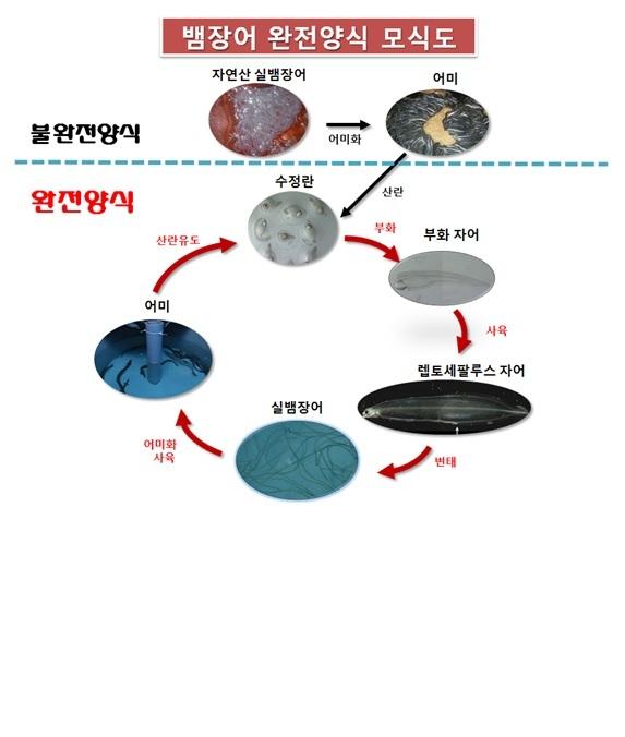 뱀장어 양식 과정 [중앙포토]