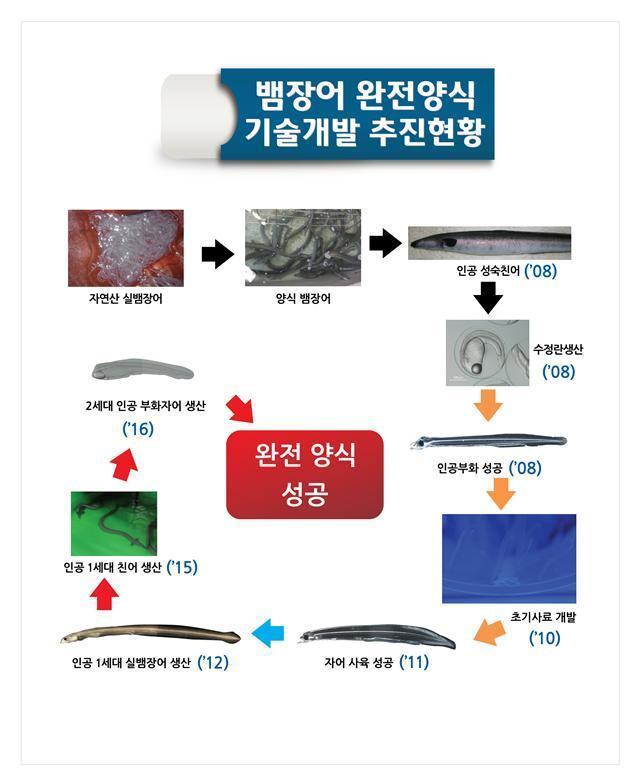 뱀장어 양식 추진 과정 [중앙포토]
