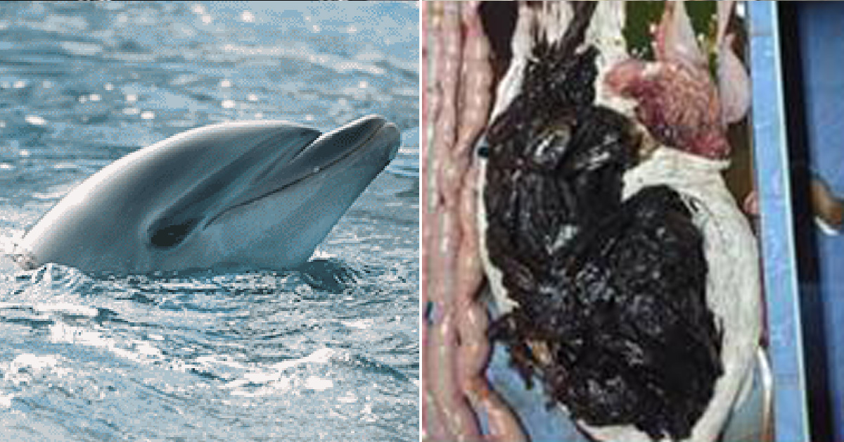 태국서 구조된 돌고래 뱃속에서 나온 비닐봉투들(오른쪽) [태국 해양해변자원국 페이스북 캡처]