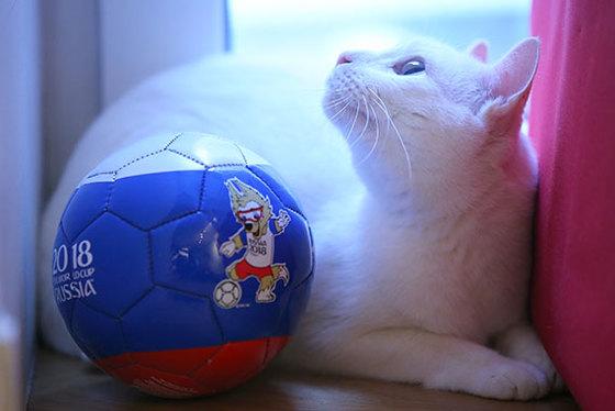 월드컵 승부 예언 고양이 아킬레스. [연합뉴스]