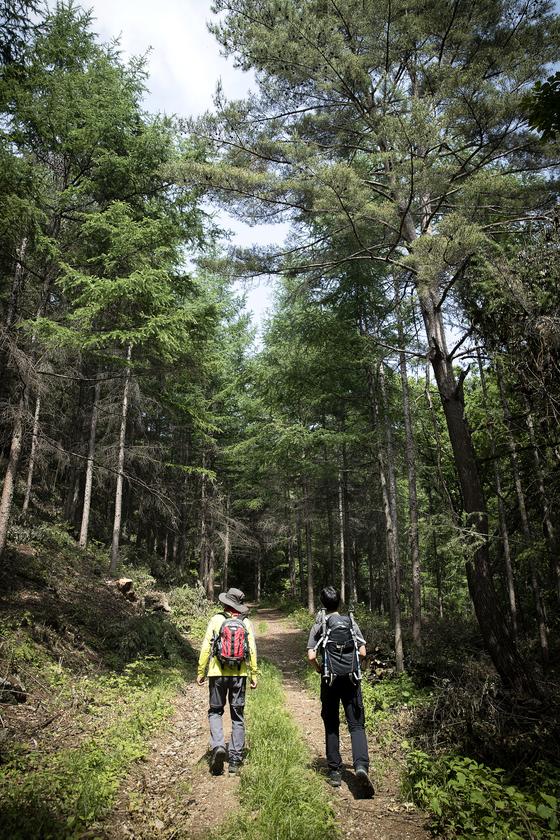 대암산 용늪을 오르는 코스는 모두 3개다. 인제군 서흥리 코스는 왕복 5시간 걸리는 산행 코스다. 용늪에 이르기 까지는 원시림 우거진 숲길이어서 선선하다. 장진영 기자
