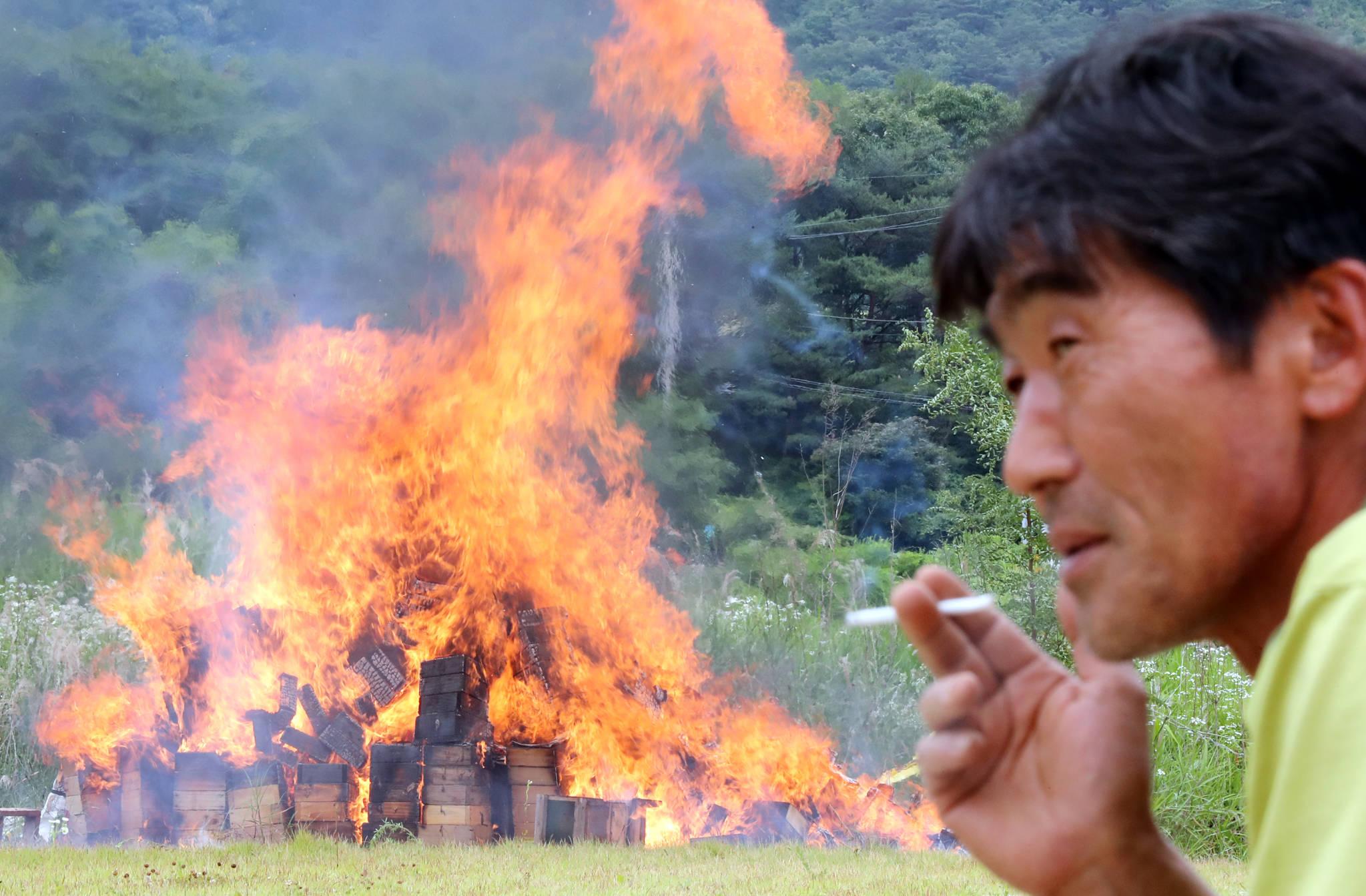 지난 11일 오후 전남 곡성군 죽곡면 보성강변에서 토종벌 농민들이 낭충봉아부패병에 걸려 폐사한 벌통을 불 태우고 있다. [연합뉴스]