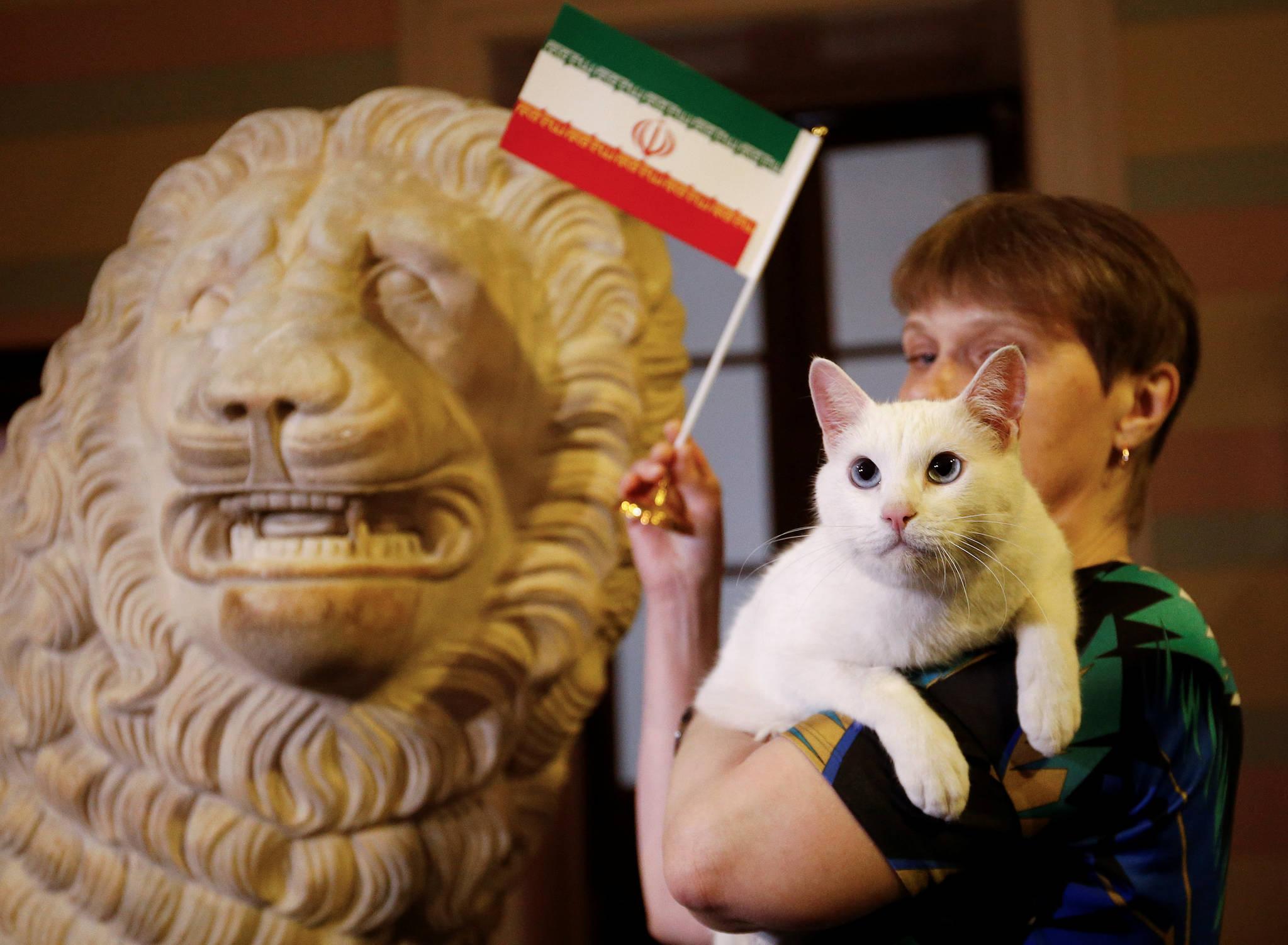 월드컵 고양이' 아킬레스가 15일(현지시간) 러시아 상트페테르부르크의 월드컵 기자회견장에서 열린 승리팀 예측 행사에서 이란을 선택했다. 한국시간으로 오전 1시에 열린 모로코와 이란의 경기는 모로코의 자책골로 이란이 1대0의 승리를 거뒀다. [로이터=연합뉴스]